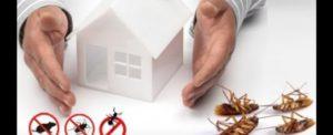 التخلص من كافة الحشرات في راحة وأمان