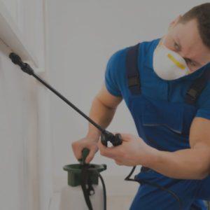 خدمات مكافحة حشرات بالدمام